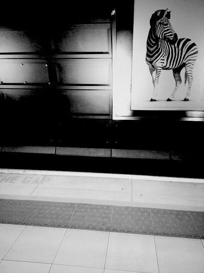 Checkpoint Zebra London WeAreJuxt.com Zebra TheMinimals (less Edit Juxt Photography) Andrographer Shootermag Checkpoint Blackandwhite