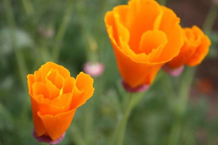 Garden Flower Summer Peace