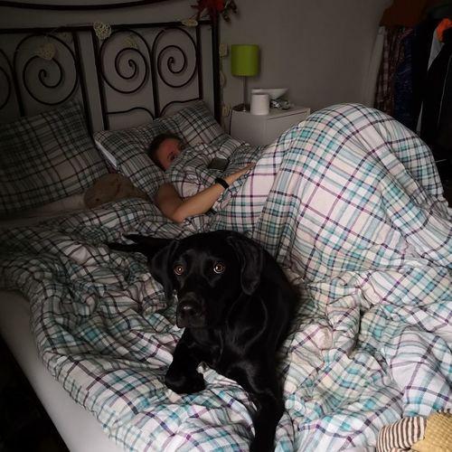 Bedroom Pets