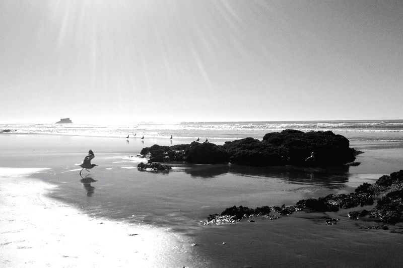 Oregon Coast Canon Beach Black And White Monochrome The Places I've Been Today Ocean