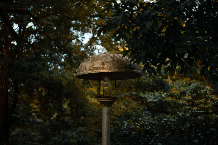 Close-up of street light on tree in forest