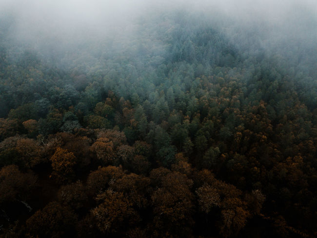 Autumn Forest drone view Plant Beauty In Nature Tree Scenics - Nature Fog Tranquility No People Forest Nature Day Growth Tranquil Scene High Angle View Land Outdoors Non-urban Scene WoodLand Environment Lush Foliage Ecosystem