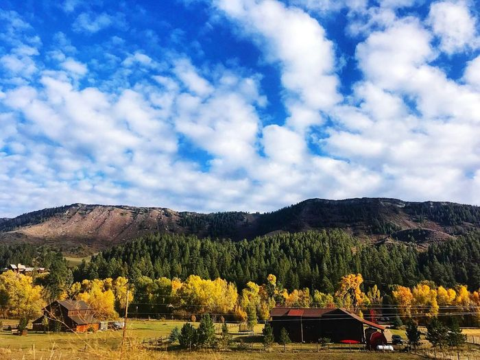 Fall in Durango Colorado Treetops Power Lines Fluffy Clouds Blue Sky Mountains Blue Sky Clouds House Colorado Red Color Yellow Color Nature Natural Beauty Tree Blue Nature Outdoors Green Trees Clouds Mountains Inspired Yellow Fall Fall Colors Red Greenery Green Growth Growing