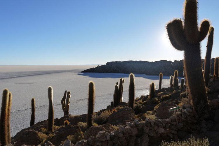 Nofilter Cacti Cactus Tranquil Salar De Uyuni Clear Sky Bolivia