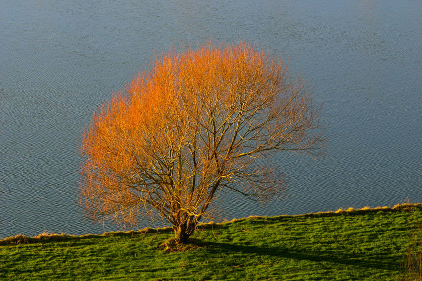 Autumn Colors Bare Tree Beauty In Nature Branch Day Landscape Lone Marina Nature No People Outdoors Scenics Somerset England Tranquil Scene Tranquility Tree UphillVillage Water Water's Edge