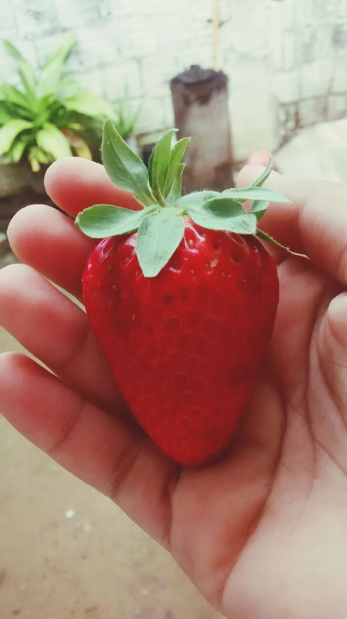 person, food and drink, fruit, holding, food, freshness, red, healthy eating, part of, cropped, strawberry, close-up, unrecognizable person, human finger, focus on foreground, personal perspective, organic