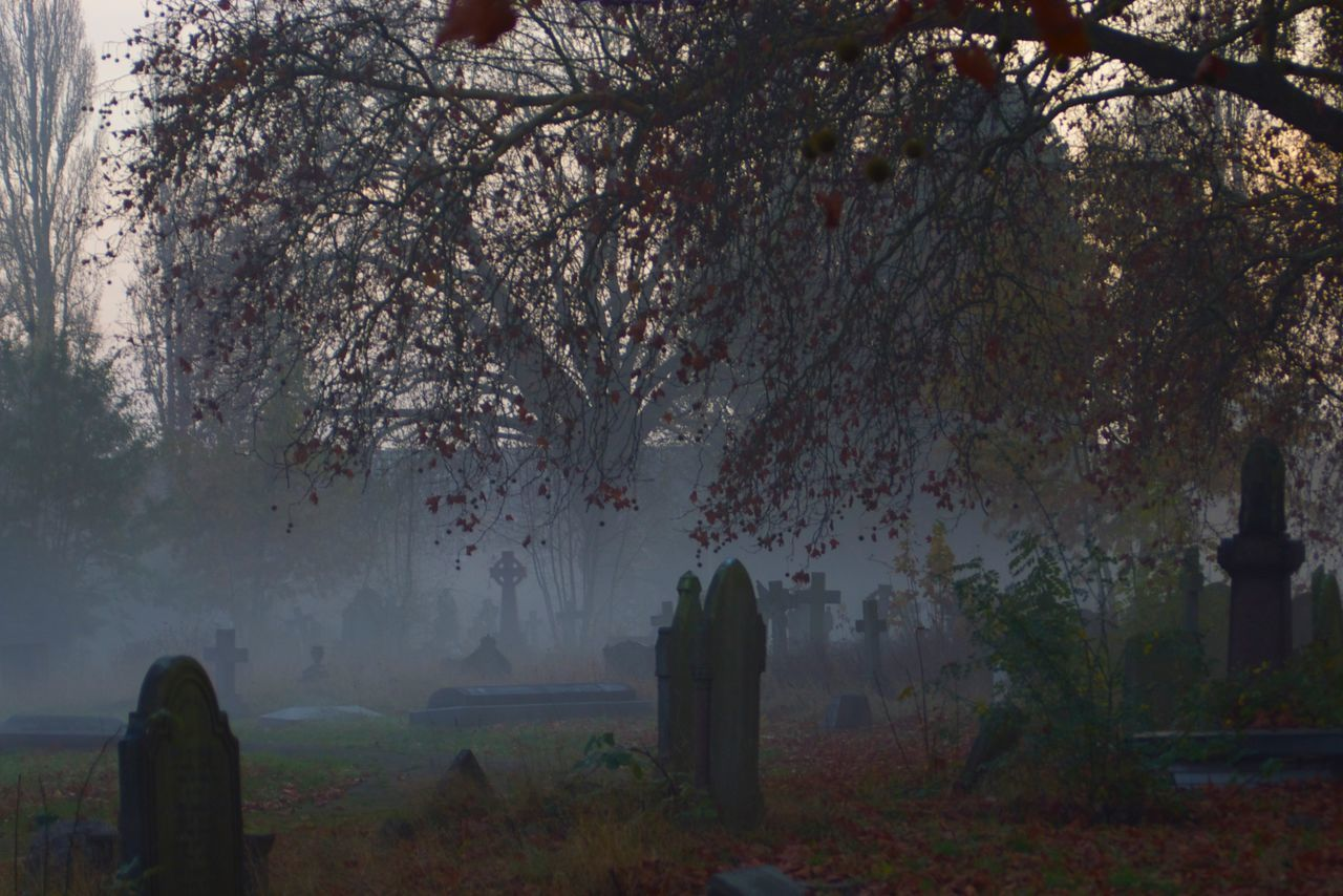 tree, cemetery, tombstone, graveyard, gravestone, branch, memorial, growth, nature, fog, outdoors, beauty in nature, no people, grass, day