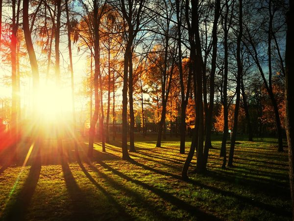 Autumn sunset Sunlight Lens Flare Sunbeam Sky Woods