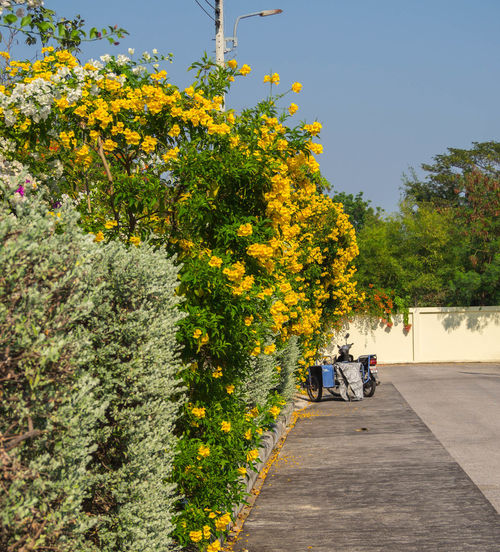 Sunlight Tree Yellow Outdoors Flower Sky The Park Poin Of View Beauty In Nature Road Motercycle