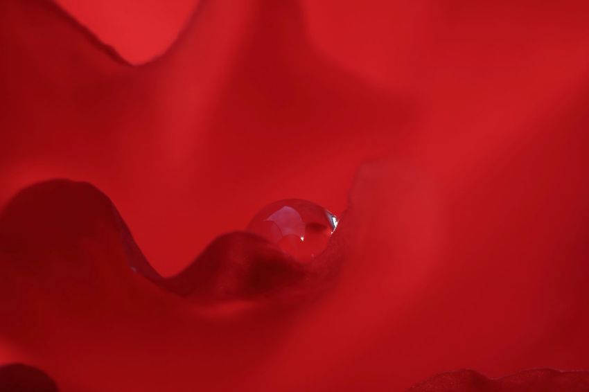 World in the drop💧 Reflection Red Artistic Petal Petal_perfection Drops Of Water Drops_perfection EyeEm Best Shots EyeEm Nature Lover EyeEm Gallery EyeEmBestPics EyeEm Best Shots - Nature Nature Nature_collection Nature Photography Naturelovers Flower Photography Eyeem4photography Water Red Drop Liquid Close-up Dripping Red Background RainDrop Full Frame Backgrounds Rain Textured