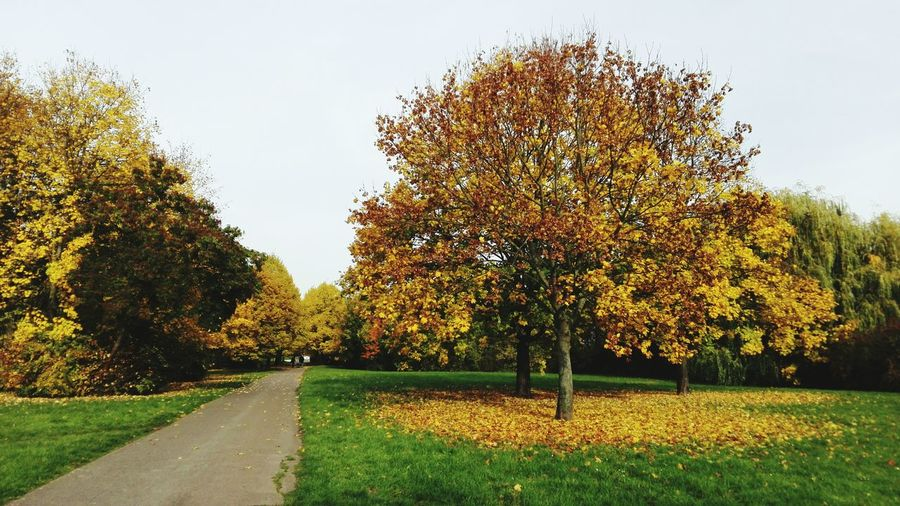 October Autumn 2015 Fall Beauty Autumn🍁🍁🍁 Autumn Leaves Yellow Leaves The Places I've Been Today Magdeburg TreePorn Hugging A Tree