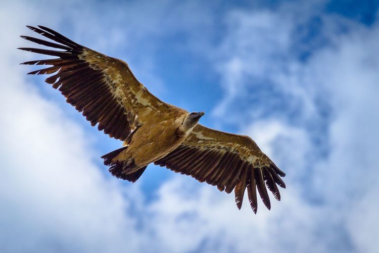 A vulture above