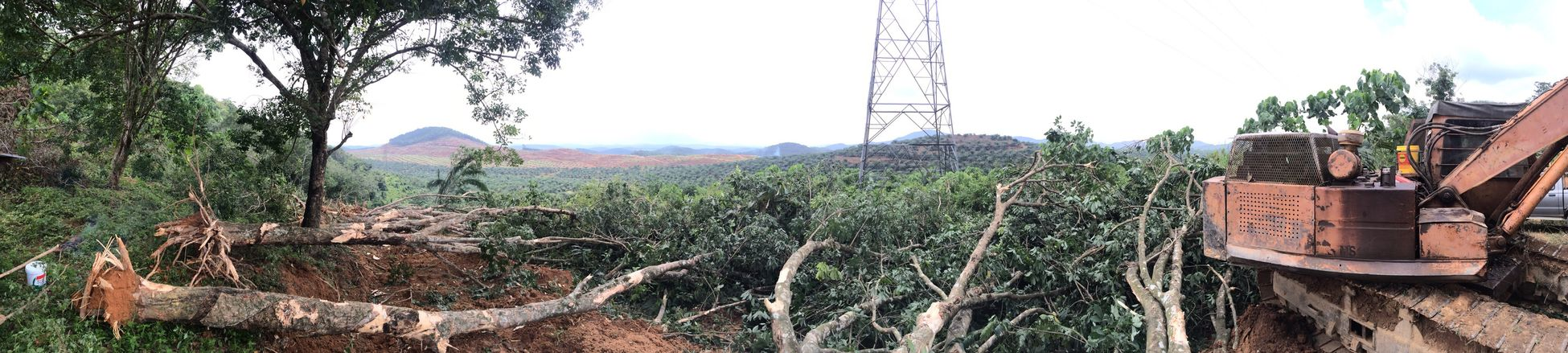 Timber Rubber Plantation Excavator Uphill Replanting Farmer Work Mountview