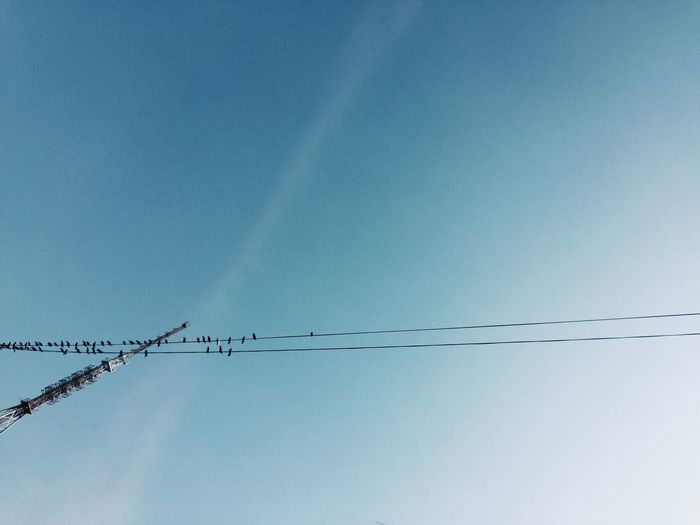 Finding New Frontiers Connection Blue No People Electricity  Low Angle View Power Supply Technology Clear Sky Animals In The Wild Nature Day Outdoors Animal Themes Bird Sky Telephone Line IMography Shot On IPhone 6 ShotOniPhone6 Shot On IPhone Mobile Photography VSCO VSCO Filters Doves Let's Gettogether!!! Minimalist Architecture