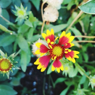 Flower Plant Nature Petal Flower Head Day Leaf Outdoors Fragility Growth Freshness Yellow Beauty In Nature No People Close-up Multi Colored Summer Botanical Garden