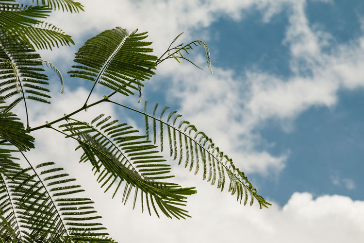 Green leaves, sky background