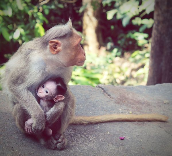 MOTHER ♥️ #AnimalLove #emotions first eyeem photo EyeEmNewHere