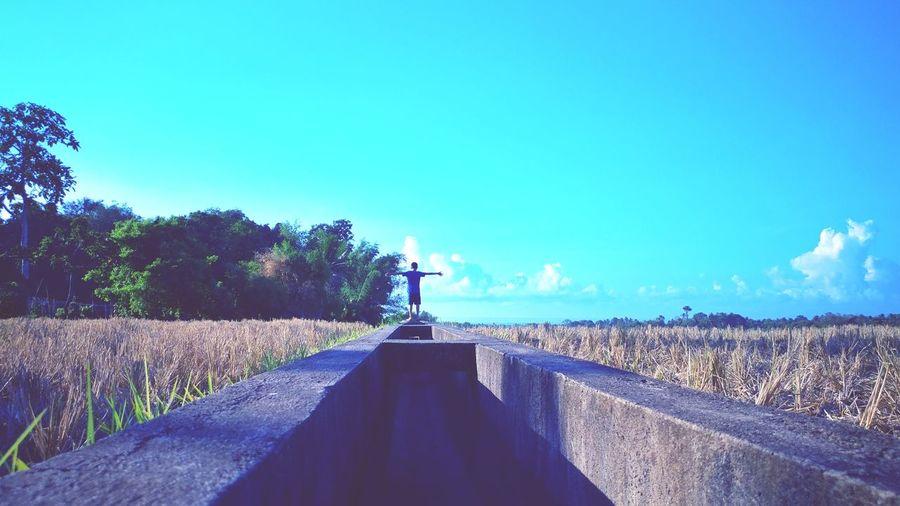 Rural Scene Rural Landscape EyeEm EyeEm Best Shots EyeEm Selects EyeEm Gallery EyeEmBestPics EyeEm Best Edits EyeEm Phillipines Clouds And Sky Tree Clear Sky Standing Full Length Blue Sky Agricultural Field Farmland Tranquil Scene Countryside Scenics Tranquility Calm