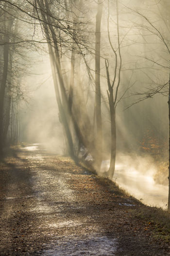 Tree Fog Plant Forest Nature Land No People Road Tranquility Winter Trunk Bare Tree Day Non-urban Scene Dirt Road WoodLand Tree Trunk Cold Temperature Beauty In Nature Outdoors Hazy