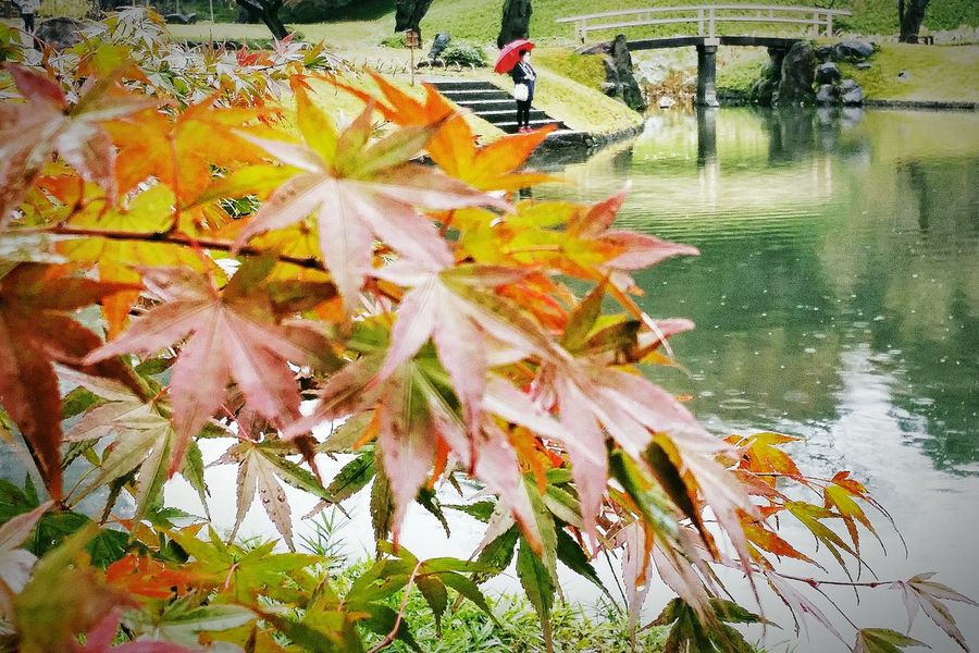 Pond Maple Leaves Enjoying The Colours Autumn Colours 秋 Autumn Fall Nature Photography Nature_collection EyeEm Nature Lover Naturelover Tokyo Nature Tokyo Autumn 2015 Autumn 2015 Tokyo Japan Travel Photography Koishikawa Korakuen Garden