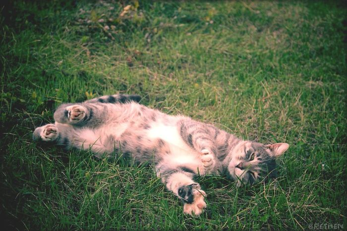Wild Cat Cat♡ Sweet Lovely Love Animal Grethen_Nahtigall Canon1100d Mine Green