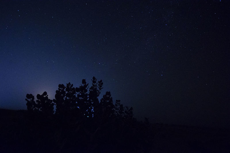 Night Sky Star - Space Tree Beauty In Nature Plant Silhouette Tranquility Scenics - Nature Low Angle View Tranquil Scene Star Space Astronomy Nature No People Growth Star Field Idyllic Outdoors