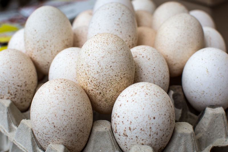 Close-up of eggs on carton