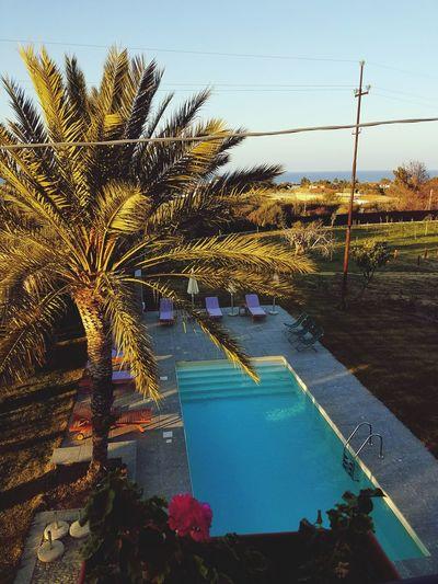 Water Outdoors No People Tree Pool Poolside