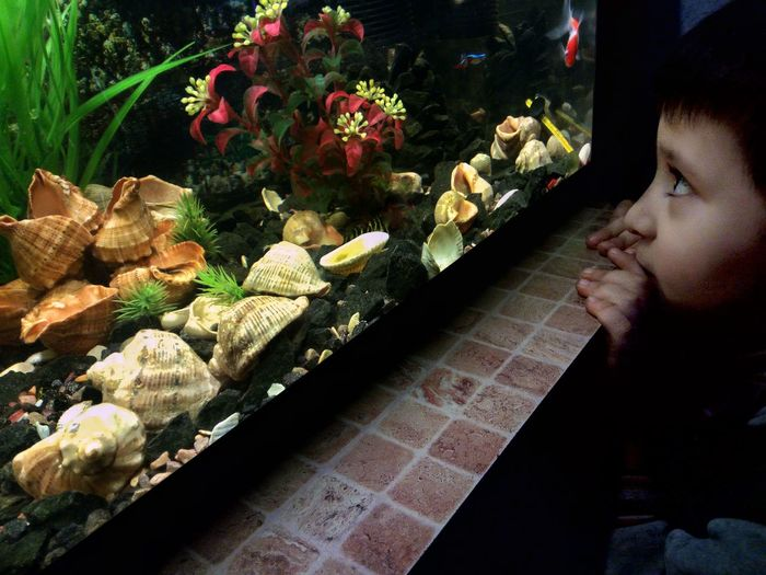 Aquarium Boy Children Kinder One Person Looking Looking Up Indoors  People Night LeTv X600 LeEco