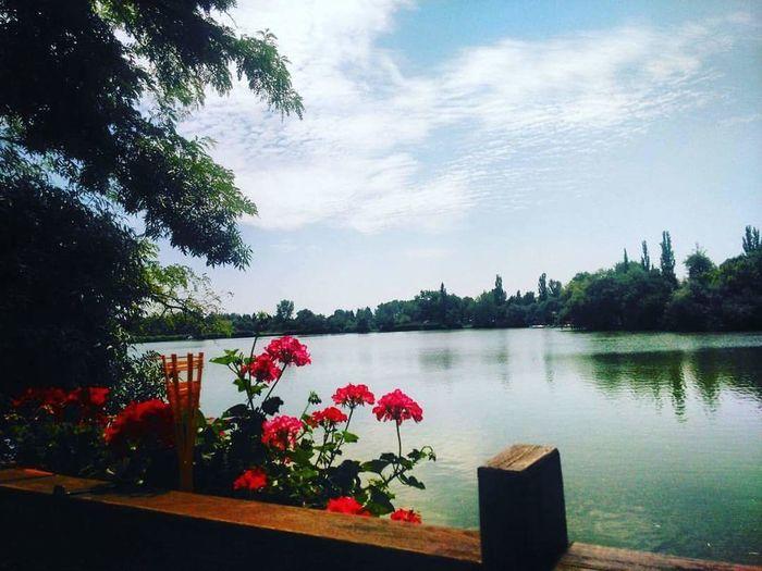 Nyíregyháza Sóstó Nature Lake Daylife Feeling Cozy