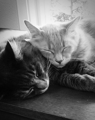 Two brothers sleeping Domestic Cat Pets Domestic Animals Animal Themes One Animal Indoors  Mammal Feline Whisker Relaxation No People Lying Down Close-up Home Interior Day Sitting The Week On EyeEm Pet Portraits
