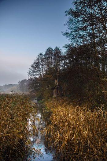 Tree Nature Beauty In Nature Outdoors Landscape Sky Forest Wald Autumn Schilf Nebel Wasser Water Fluss