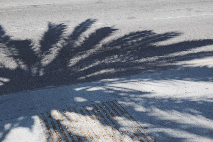 Palm trees blowing in the wind. Walking Around Barcelona Palm Trees Holiday Shadow