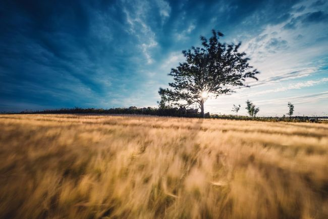Flow to me. Nature Landscape Field Rural Scene Tree Outdoors Cloud - Sky Beauty In Nature Scenics Day Sunset No People Sky Traveling Sommergefühle Serenity Sunlight Tranquility Sweden Sweden Nature Pentax Field Tree Nature Non-urban Scene