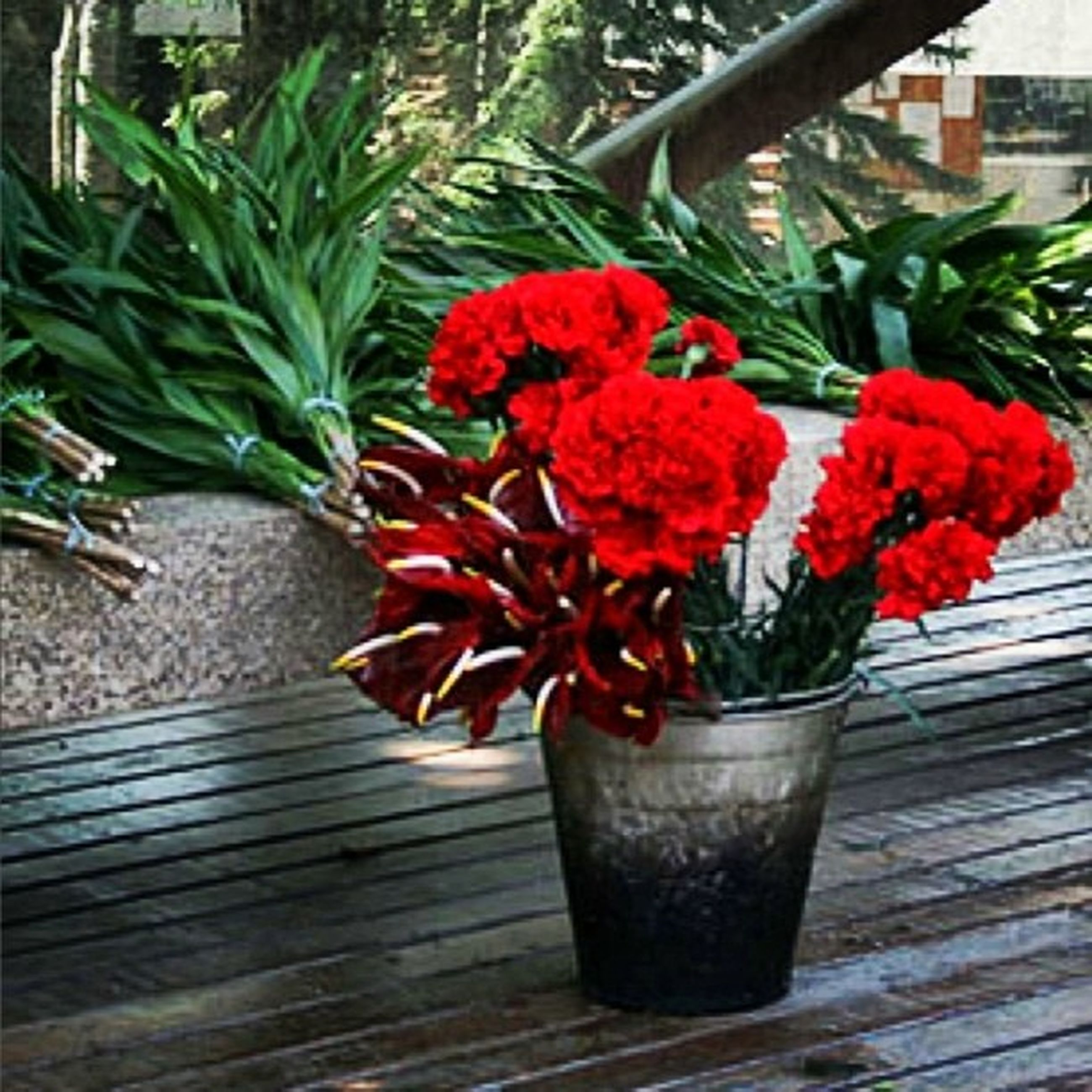 flower, potted plant, freshness, red, plant, growth, fragility, flower pot, leaf, vase, petal, nature, beauty in nature, table, flower head, close-up, front or back yard, no people, botany, in bloom