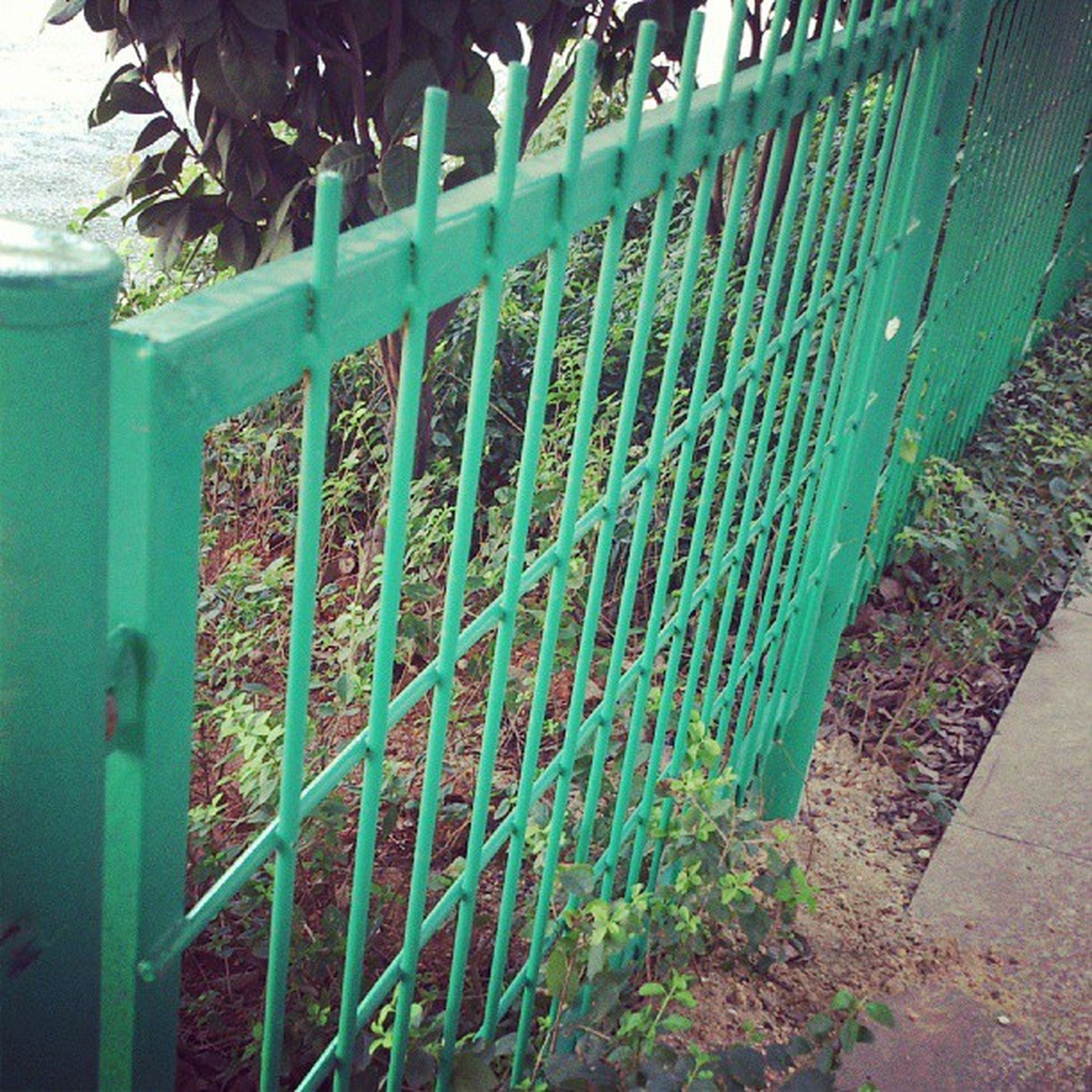 plant, metal, growth, fence, green color, close-up, protection, wall - building feature, leaf, day, railing, safety, metallic, sunlight, no people, outdoors, built structure, front or back yard, nature, potted plant