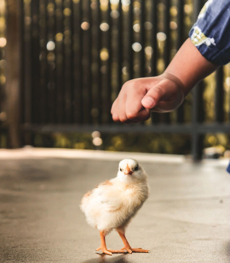 Full length of hand holding bird against blurred background
