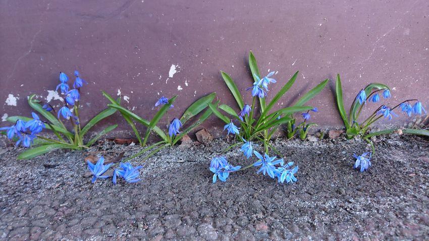Fragile Flowers in a Hostile Environment Showcase April