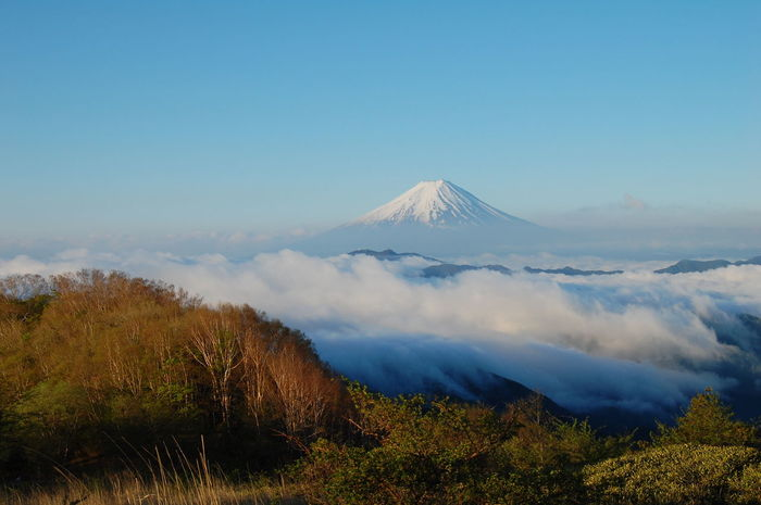 南大菩薩より富士山 Scenics Nature Beauty In Nature Social Issues Landscape Fog Cloud - Sky Mountain Tranquility Morning Outdoors No People Sky Day Dawn Mountain Peak Freshness Snow Tree Sunlight