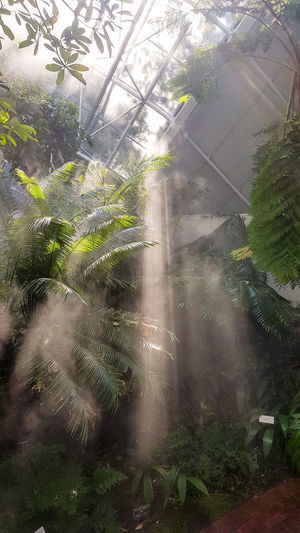 Sunrays Gardens Greenery Mist Botanical Garden Spring Plant Water Tree Greenhouse Backgrounds Spraying Window Drop Wet Condensation Droplet Dripping Plant Life Growing Blooming Rain