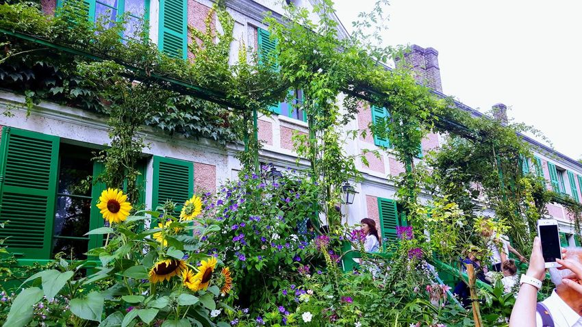 Flowers,Plants & Garden Claude Monet's Garden Claude Monet's Home Eye4photography  EyeEm Gallery The Week On EyeEm Giverny - France