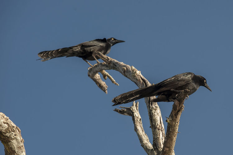 Low angle view of birds perching on branch against sky