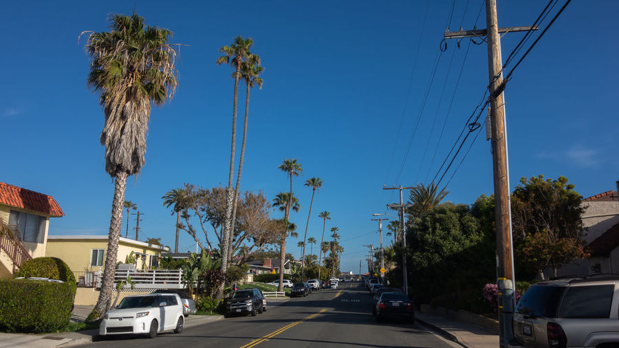 Road by palm trees against sky in city