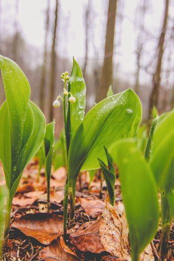 Close-up Growth Green Color Plant Leaf Nature Nature Nature_collection Forest Woods Beauty In Nature Outdoors Flower The Great Outdoors - 2017 EyeEm Awards