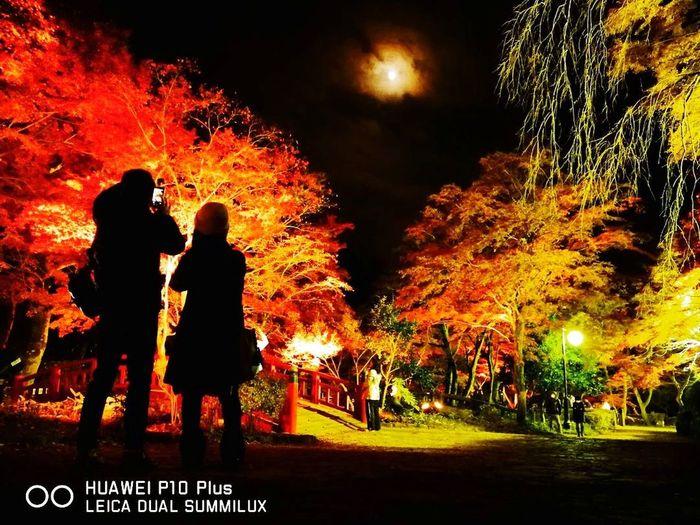 熱海梅園 ライトアップ Night Two People Silhouette Illuminated Outdoors Tree People Togetherness Women Adult Adults Only Sky
