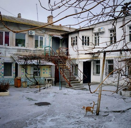 Crimea Yard Winter Built Structure Cold Temperature No People Residential Building House Building Exterior Cat Crimea, Ukraine Old Town Евпатория Cold Weather Outdoors Evpatoria EyeEm EyeEm Gallery EyeEmBestPics