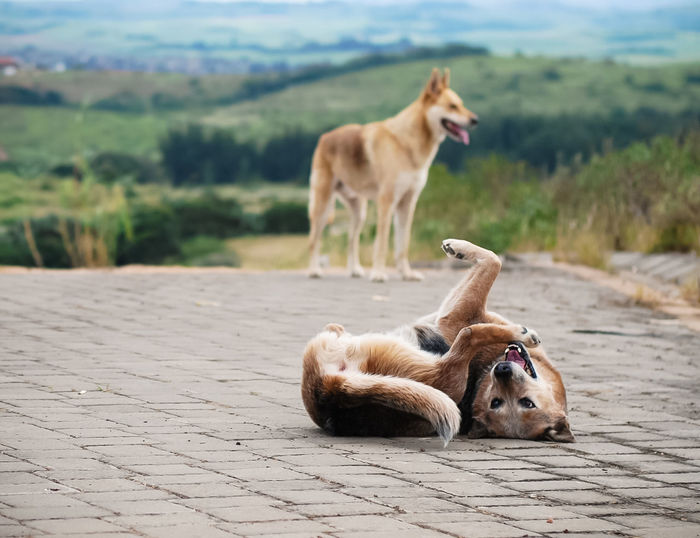Dogs relaxing outdoors