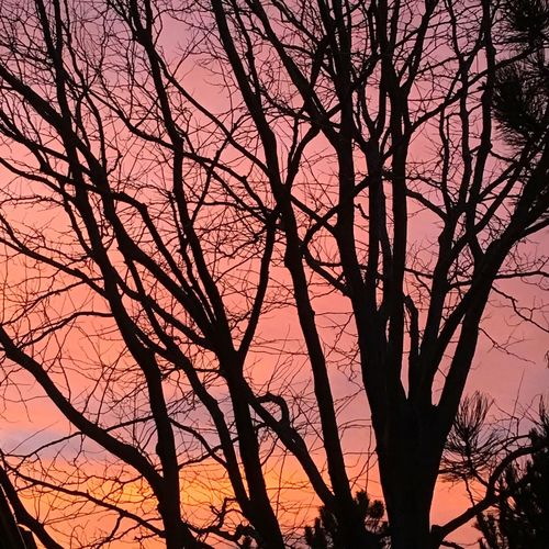 Wintertime Winter Trees Winter Sunset Sunset Naked Trees Colorful