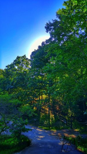Tree Nature Outdoors Beauty In Nature Green Color Forest No People Scenics Sky Plant Blue Summer Day Landscape Freshness Blue Sky Kentucky  Simple Cloud - Sky Tree Out In The Country Mountain View Nature Beauty In Nature The Week On EyeEm