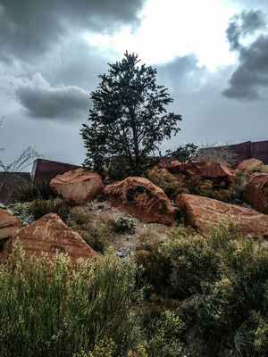 Redrock Lasvegas The Great Outdoors Trees Natural Beauty This Week On Eyeem Outdoor Photography Nature Middle Of Nowhere Middleofnowhere Spring Has Sprung Nature Photography Nevada The Great Outdoors With Adobe The Great Outdoors - 2016 EyeEm Awards